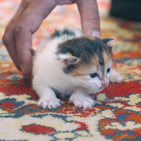 Portrait of a Small kitten on the carpet. Selective focus