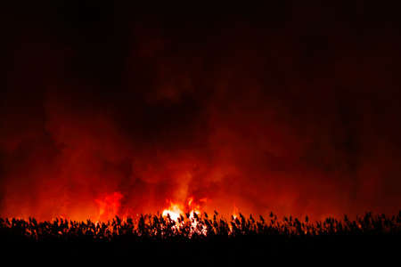 Flames from dry grass fire at night. Night fire in the field