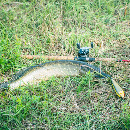 Pike and spinning with baitcasting reel on grass Фото со стока