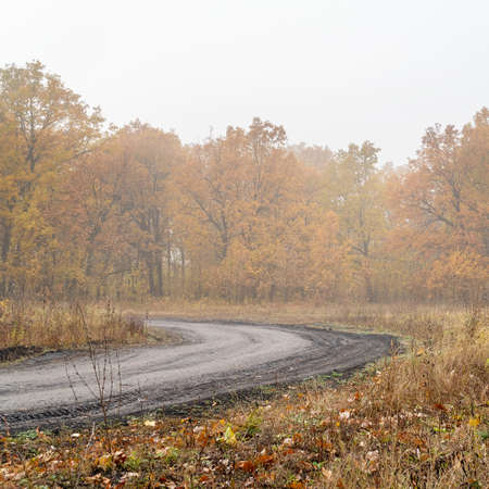 Morning autumn fog over a dry yellow meadow, forest and forest path