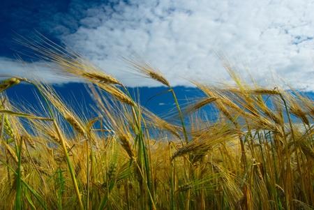 cropland: cropland