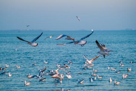 The flock of gulls feeding in the ocean