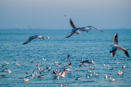 The flock of gulls feeding in the ocean
