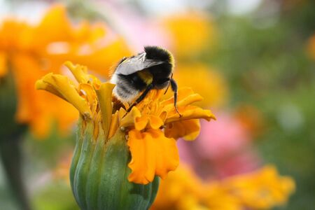 Bumble-bee Stock Photo - 5920400