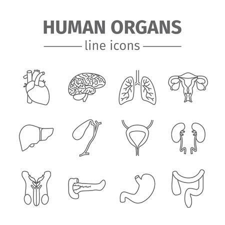 bowel: Human organs line icons set. Stock Photo