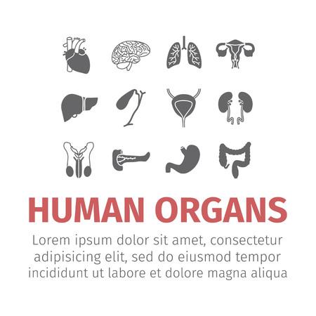 Menselijke organen iconen set.