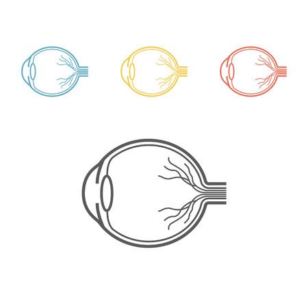 Eyeball anatomy line icon
