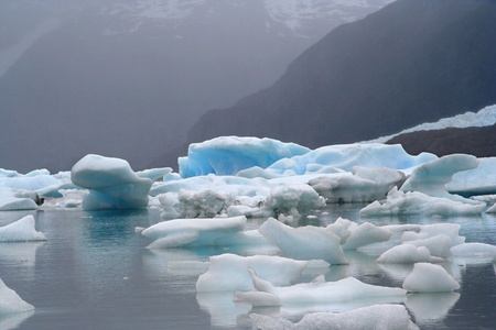 a glacier flows until argentino lake, in the argentinian patagonia