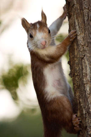 close view of a squirrel on a tree photo