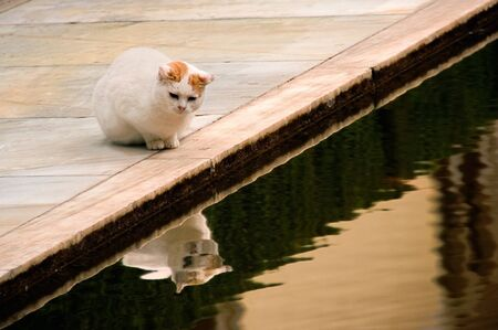 A cat following a fish in a fount, inside of the Alambra complex
