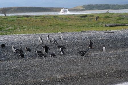 pinguinera: una colonia de ping�inos han recibido la visita de un barco lleno de turistas Foto de archivo