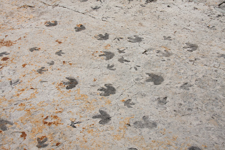 dinosaur animal: dinosaur trackway near morrison, colorado Stock Photo