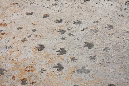 Vía de circulación de dinosaurio cerca de Morrison, Colorado Foto de archivo