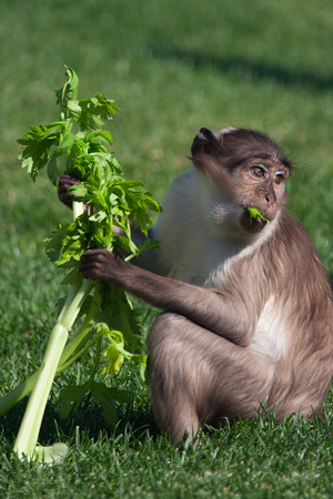 plants species: una piccola scimmia mangiare in pace