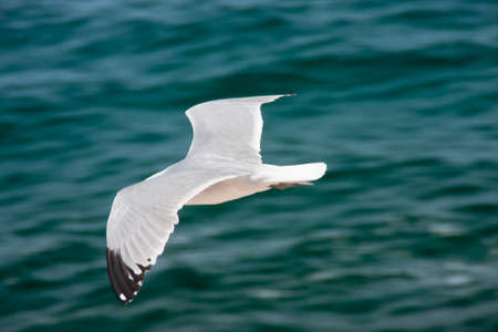seagull flying over the sea