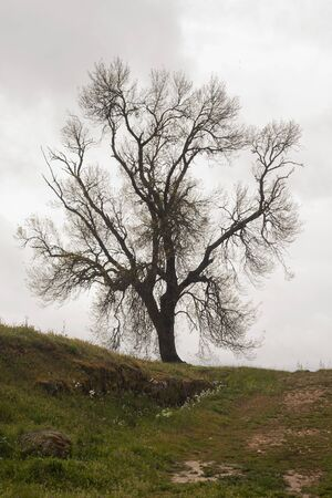 a tree in the countryside with sad sky at the background Reklamní fotografie
