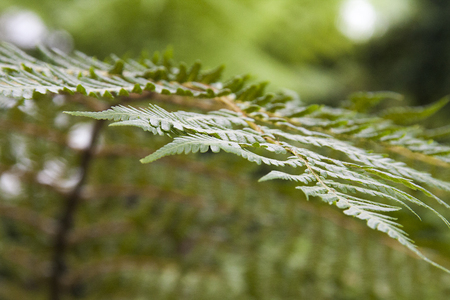 close view of fern leafs