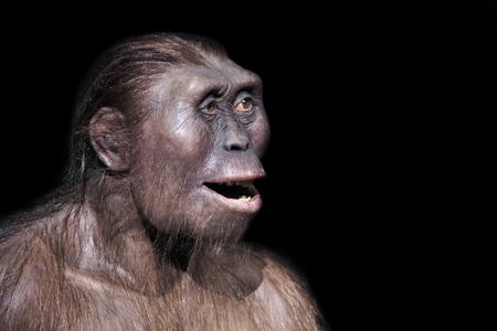 australopithecus afarensis, one of our most ancient ancestors