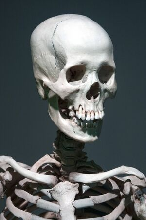 picture of a real human skeleton, for educational purposes