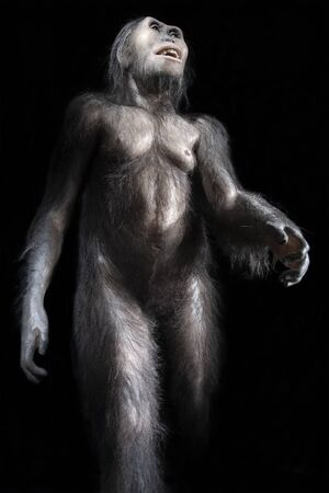 Australopithecus afarensis, an extinct hominid that lived 3 million years ago in africa