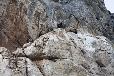 vultures having rest on a cliff