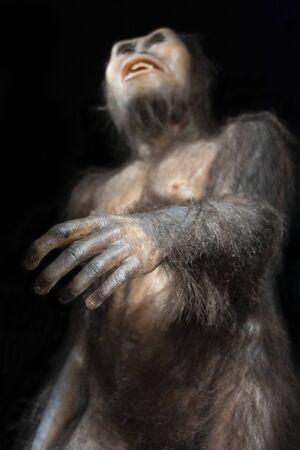 Australopithecus afarensis, een uitgestorven mensachtige die 3 miljoen jaar geleden in Afrika leefde