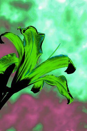 wierd: green lilly