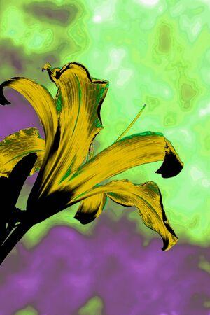 wierd: yellow lilly