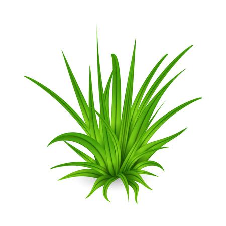 Illustrazione del mazzo di erba verde alta isolato su priorità bassa bianca.