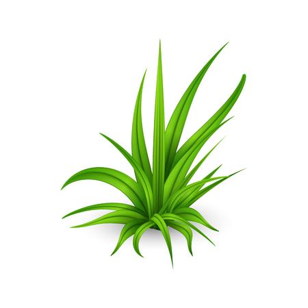 Illustration d'un petit bouquet d'herbe verte fraîche isolé sur fond blanc.