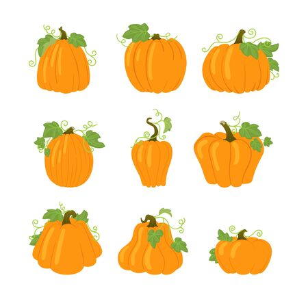 Set of simple yellow pumpkins with leaves and vines. Halloween, harvest vector icons. Isolated on white background. Different shapes. Autumn holidays.
