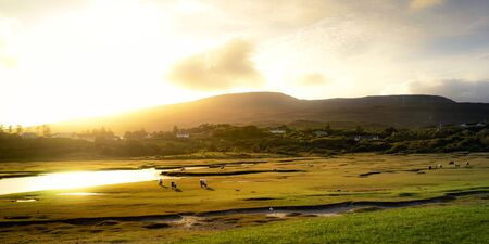 Sheep on the grassland in Ireland in the evening with a beautiful autumn sunset, Achill Island, Ireland Stock Photo