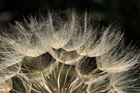 blowball: Blowball macro close-up. Seeds of dandelion. Nature. Stock Photo