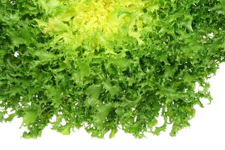 escarola: Vegetales de hoja - verde endibia (Cichorium endivia) Foto de archivo