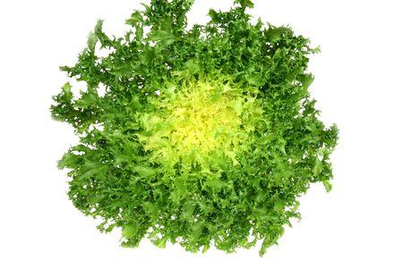 endivia: Vegetales de hoja - verde endibia (Cichorium endivia) Foto de archivo