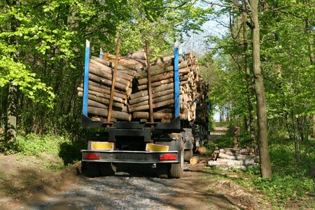 truckload: Freshly cut timber on a truck. Forestry industry.