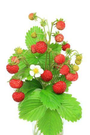 Wilde aardbeien - mooie natuurlijke fruit en bloesem Stockfoto