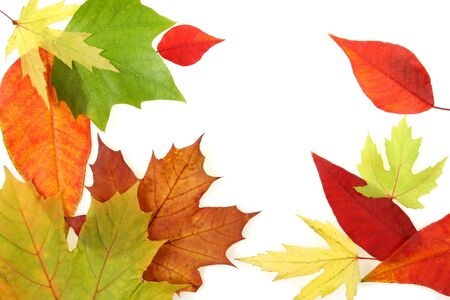 Autumn forest background. Colorful seasonal concept. Leaves texture.