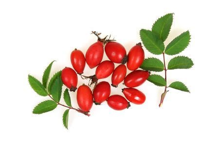 northwest africa: Crataegus monogyna, known as Common Hawthorn, is a species of hawthorn native to Europe, northwest Africa and western Asia.