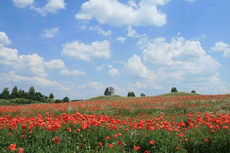 jura: Poppyseed and chamomile fields. Early summer in Jura Krakowsko-Czestochowska, Poland.