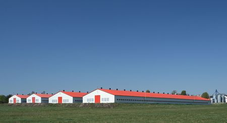 farming industry: Modern farm poultry buildings. Agriculture in Poland.
