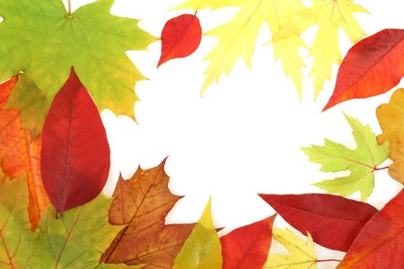 Autumn forest background. Colorful seasonal concept. Leaves texture. Stock Photo - 5518223