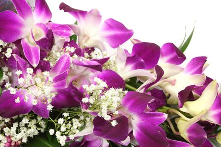 orchideae: Beautiful orchid on a white background Stock Photo