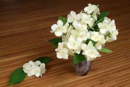 Spring time still life - jasmine flowers in a vase on a table photo
