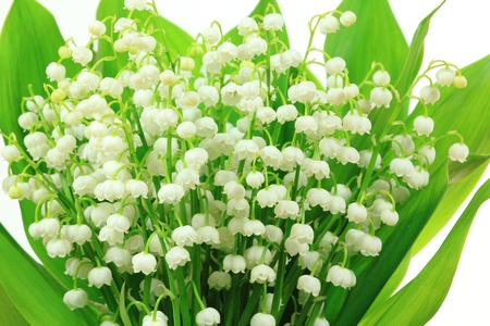 Lily of the Valley flowers (Convallaria majalis). Flower bunch against white background. photo