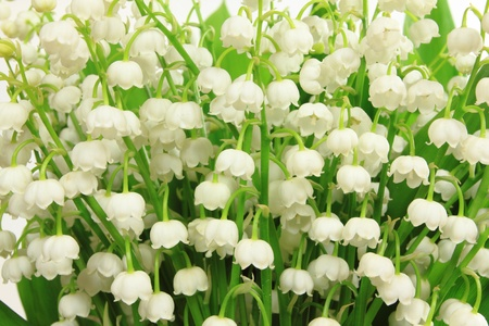 Flower bunch against white background. Lily of the Valley flowers (Convallaria majalis).