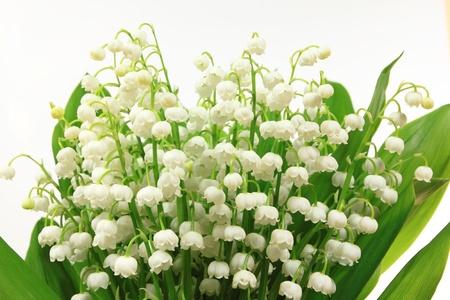 lirio blanco: Flores de lirio de los valles (Convallaria majalis). Mont�n de flores sobre fondo blanco.