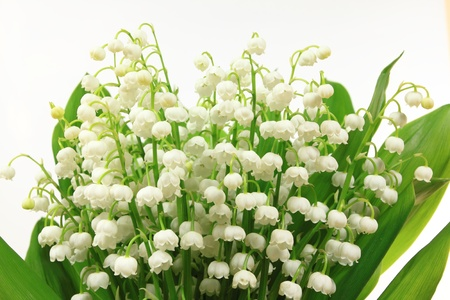 Lily of the Valley flowers (Convallaria majalis). Flower bunch against white background. Stock Photo