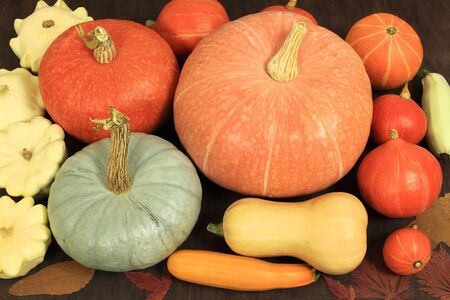 Colorful pumpkins and squashes collection. Rich colors of a fall harvest. photo