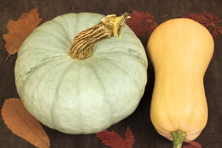 gourds: Pumpkin and butternut squash on the wooden table. Stock Photo